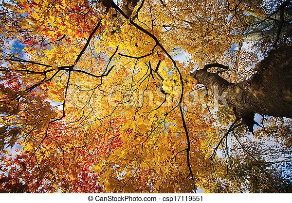 Autumn Japanese garden with maple - csp17119551