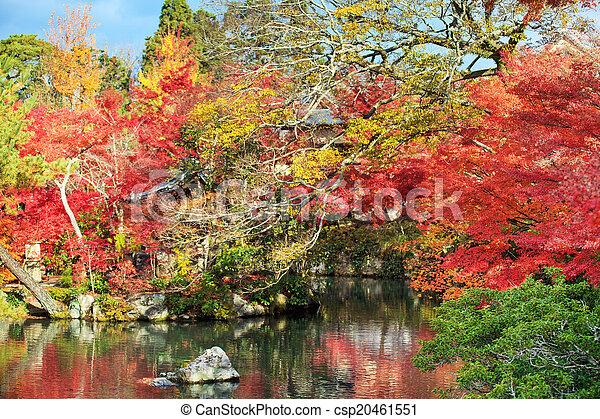 Autumn Japanese garden with maple - csp20461551