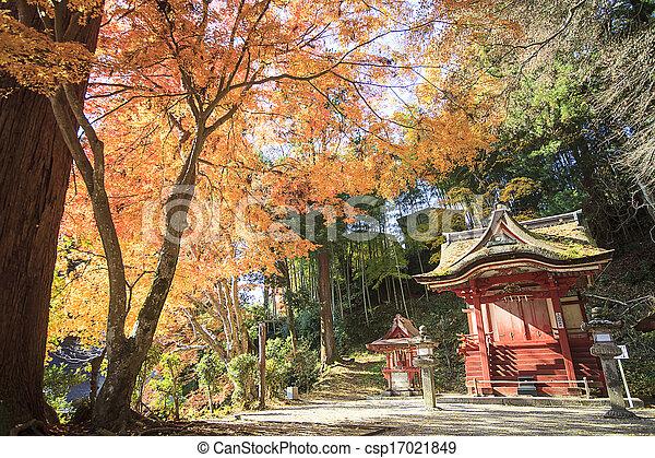 Autumn Japanese garden with maple - csp17021849