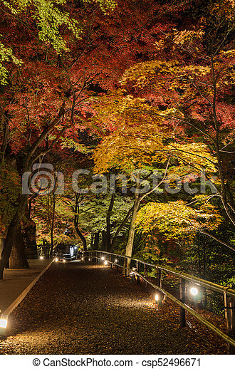 Autumn Japanese garden with maple trees at night in Kyoto, Japan - csp52496671
