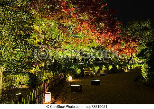 Autumn Japanese garden with maple trees light-up at night in Okayama, Japan - csp73819081