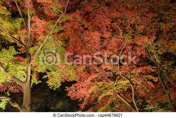 Autumn Japanese garden with maple trees at night in Kyoto, Japan - csp44676621
