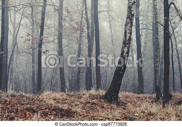 autumn kopyto, mlha, les, suchý, počasí - csp87773928