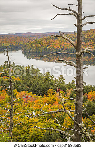 Autumn Lake and Dead Pine - Ontario, Canada - csp31998593
