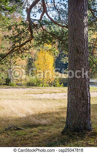 Autumn landscape in the forest - csp25047818