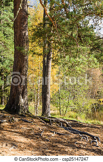 Autumn landscape in the forest - csp25147247