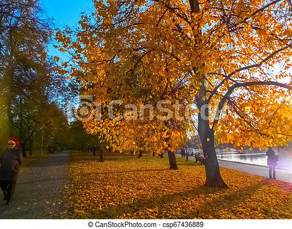 Autumn landscape in the park - csp67436889