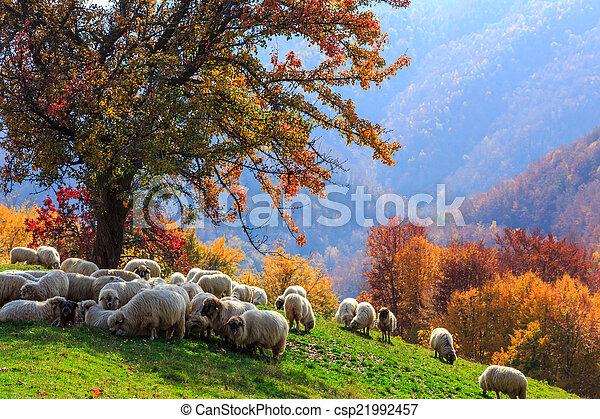 Autumn landscape, sheep, shepard dog - csp21992457