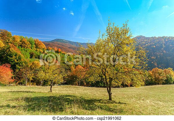 Autumn landscape - csp21991062
