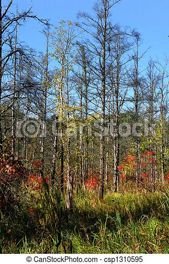 Autumn Landscape - csp1310595