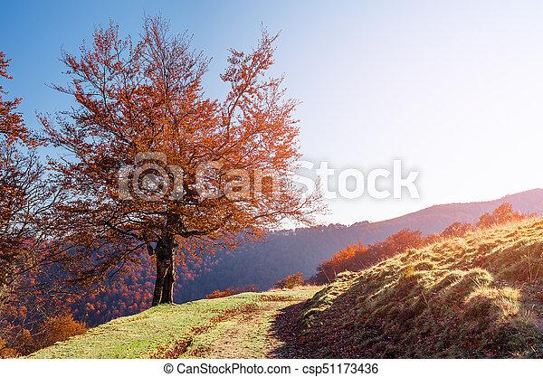 Autumn landscape with a road - csp51173436