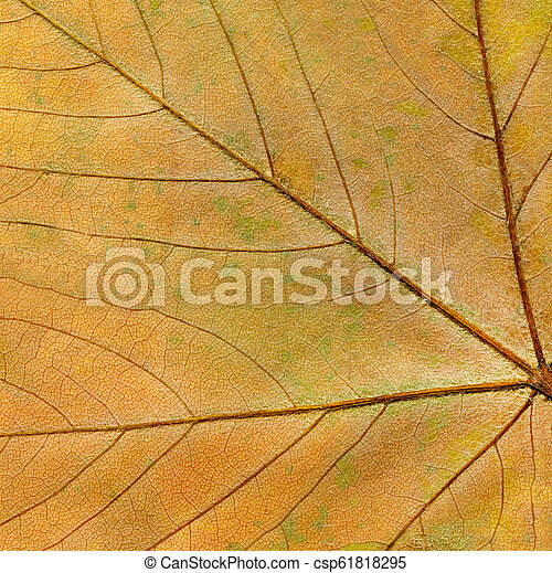 Autumn leaf background close up. Grunge background with autumn leaves - csp61818295
