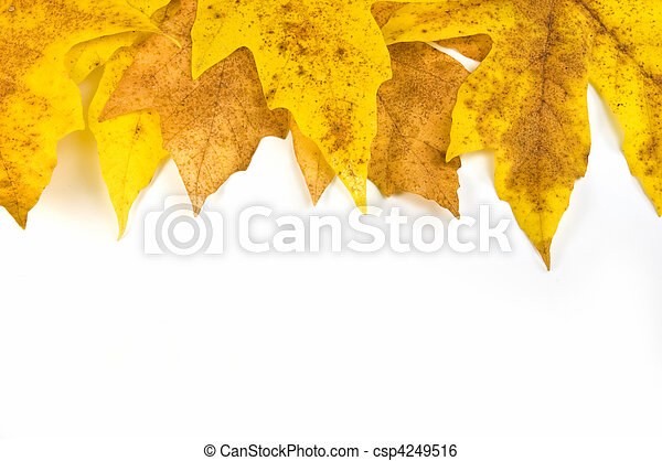 Autumn leaf border - csp4249516