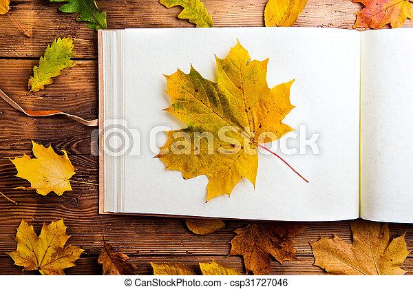 Autumn leaf composition. - csp31727046