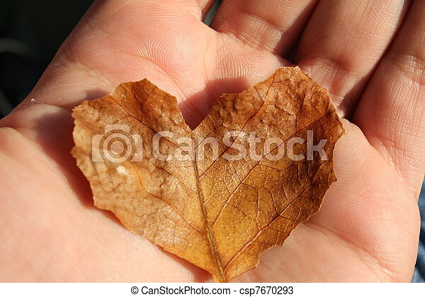 autumn leaf heart - csp7670293