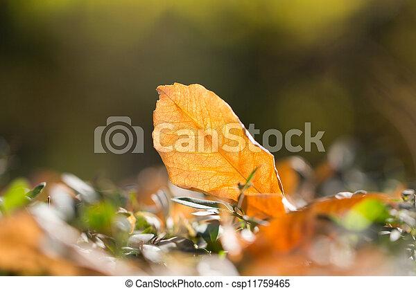 autumn leaf in nature - csp11759465
