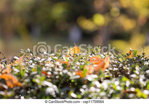 autumn leaf in nature - csp11759564