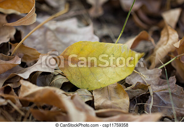 autumn leaf in nature - csp11759358