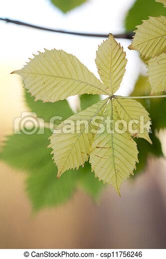 autumn leaf in nature - csp11756246