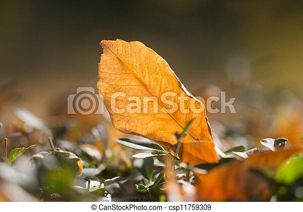 autumn leaf in nature - csp11759309