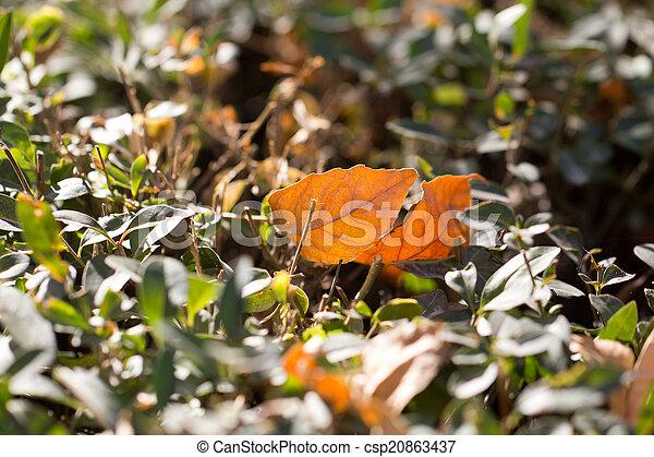 autumn leaf in nature - csp20863437