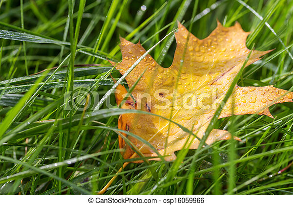 Autumn leaf in the grass - csp16059966