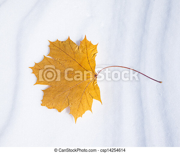 Autumn leaf in the snow in the winter - csp14254614
