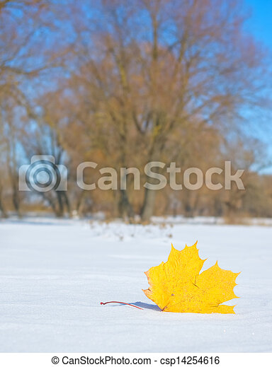 Autumn leaf in the snow in the winter - csp14254616