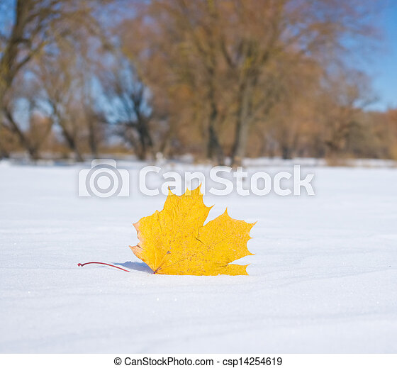 Autumn leaf in the snow in the winter - csp14254619