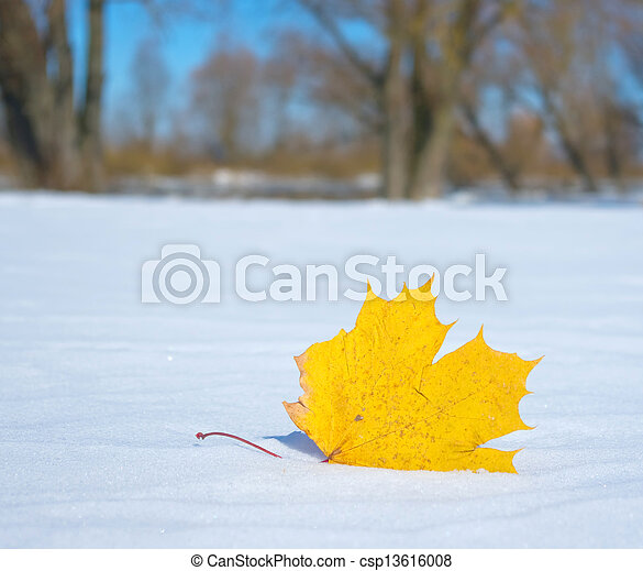 Autumn leaf in the snow in the winter - csp13616008