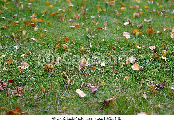 Autumn leaf on green grass - csp16288140