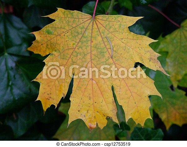 Autumn leaf - csp12753519
