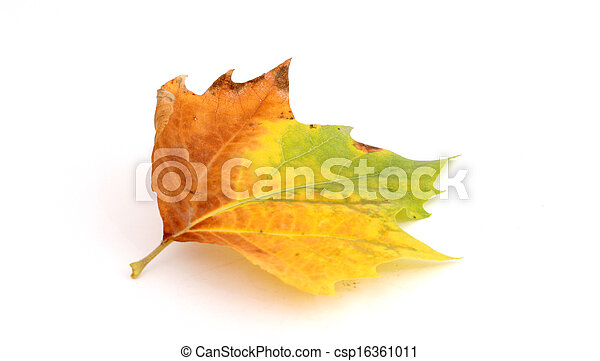 autumn leaf - csp16361011