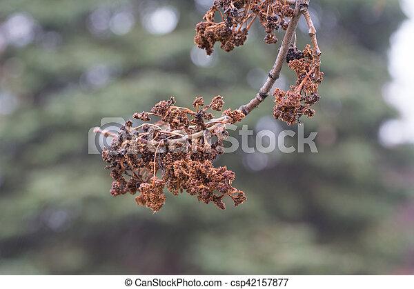 Autumn leaf - csp42157877