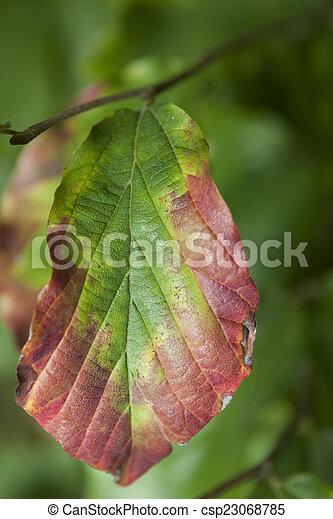 autumn leaf - csp23068785
