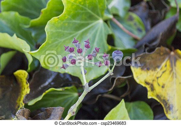 autumn leaf - csp23469683