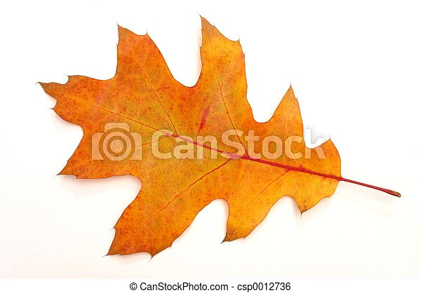 Autumn Leaf - csp0012736