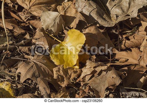 autumn leaf - csp23106260