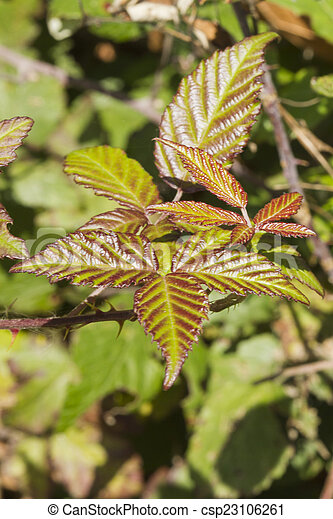 autumn leaf - csp23106261