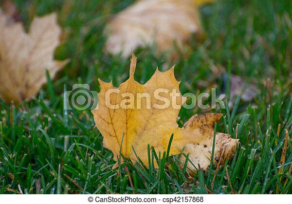 Autumn leaf - csp42157868