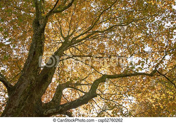 autumn leaf - csp52760262