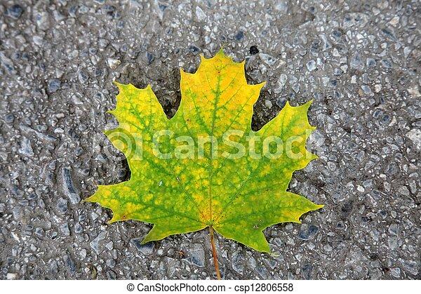 Autumn leaf - csp12806558