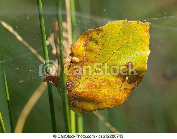 autumn leaf - csp12286743