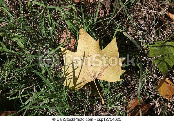 Autumn leaf - csp12754625