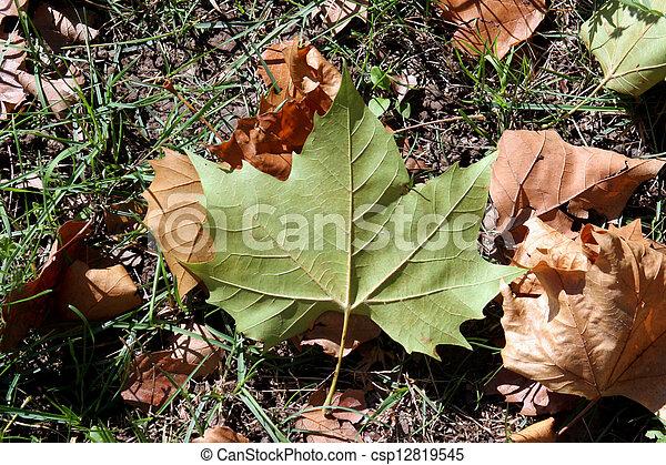 Autumn leaf - csp12819545