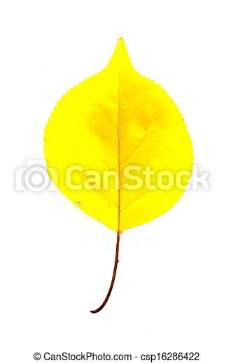 Autumn leaf - csp16286422