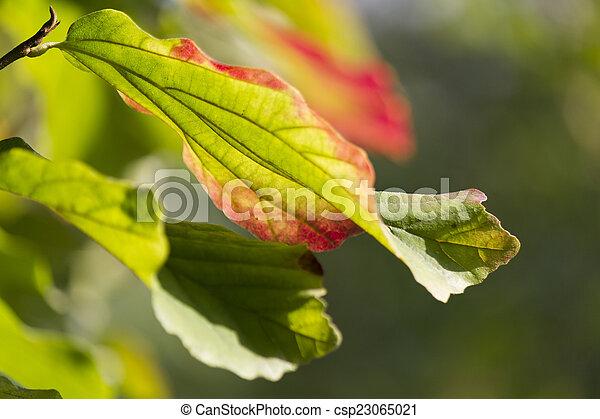 autumn leaf - csp23065021