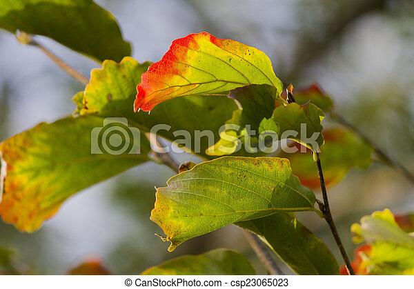 autumn leaf - csp23065023