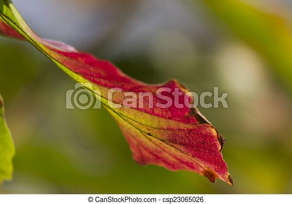 autumn leaf - csp23065026