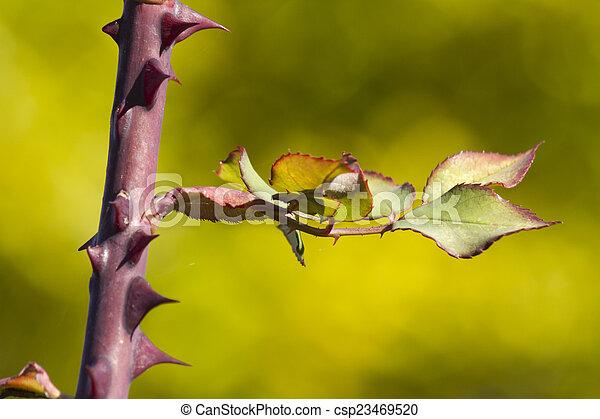 autumn leaf - csp23469520